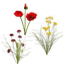 Kwiat ogrodowy i kwiat łąki