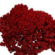 Achillea 1kg Wino Czerwone