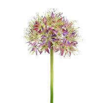 Allium jasnofioletowe L76cm