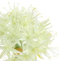 Allium kremowy biały L76cm