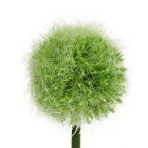 Allium zielone L37,5cm 4szt.