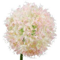 Allium Kremowy Różowy Ø15cm L70cm
