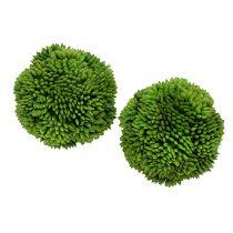 Allium kulka 5cm Zielony 4szt