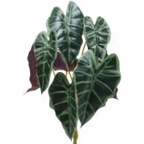 Alokasie strzałka liść zielony / fioletowy H48cm