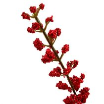 Astilbenbush Red 52cm
