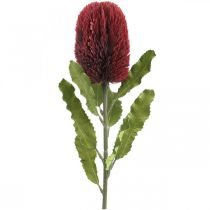 Kwiat Sztuczny Banksia Czerwony Burgundowy Egzotyczny 64cm
