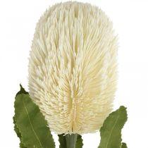 Kwiat Sztuczny Banksia Biały Kremowy Sztuczny Egzotyczny 64cm