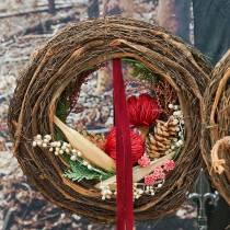 Banksia Baxterii czerwona 8szt.