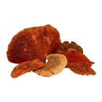 Gąbka do drzew pomarańczowa 1kg