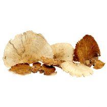 Gąbka do drzew bielona 1kg