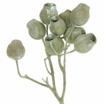 Gałązka Bellgum 5cm - 7cm zielona szroniona 20szt.