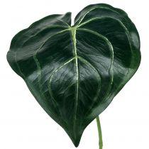 Kaladium liściaste 32cm 2szt.