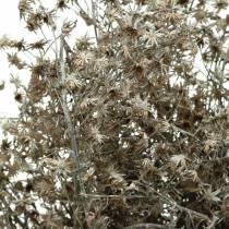 Kwiaciarnia sucha Gałązka Wildflower White Washed 60cm 100g