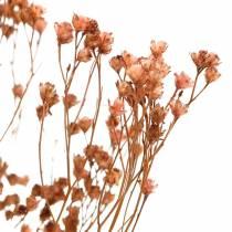 Suszone kwiaty Żarnowiec Brunatny 170g