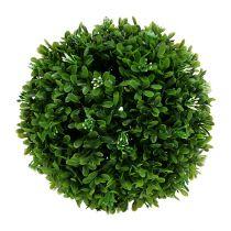 Kula bukszpanu Ø20cm zielona