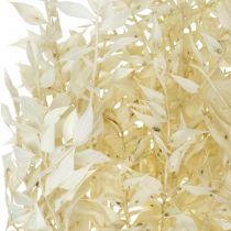 Ruscus bielony suszony gałązki ruskusa pęczek 4-6szt.