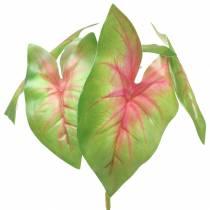 Sztuczna Kaladie sześciolistna zielona / różowa