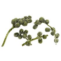 Casurina stożek zielony, woskowany 110g