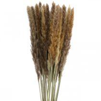 Trawy suche trawa pampasowa naturalna wiązka 80cm