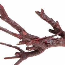 Decoast curry bush red washed 500g