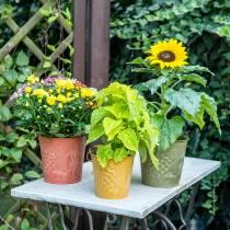 Wiadro dekoracyjne Owoce żółte, pomarańczowe, zielone myte Ø15cm H14cm Zestaw 3 szt.