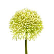 Deco Allium Cream Ø6,5cm L39cm