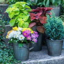 Dekoracyjne wiadro z uchwytem, dekoracja ogrodu, doniczka na rośliny, metalowe naczynie Ø16,5cm H15cm
