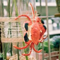 Deco Crab Red 15cm