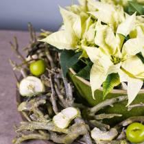 Decoast curry bush green washed 500g