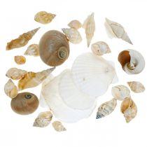 Deco Snail Shells Ślimaki Morskie Natura Morska Dekoracja 350g