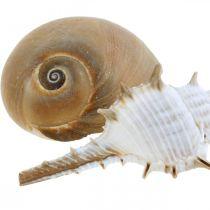 Muszle dekoracyjne i muszle ślimaków puste białe, dekoracja przyrodnicza morska 350g
