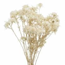 Suszony kwiat ostropestu plamistego gałązka bielona 80g