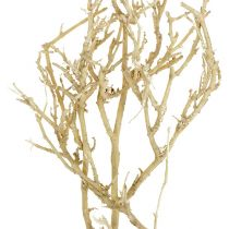 Dry Tree 500g bielona