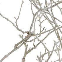 Suche drzewo bielone 500g