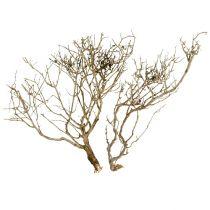 Suche Drzewo Naturalne 500gr