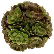 Kula Echeveria 5cm zielona 4szt