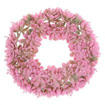 Echeveria wianek różowy Ø18cm 4szt.