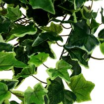 Wieszak na bluszcz biało-zielony 70 cm