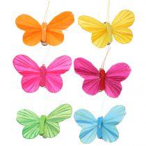 Motyl z piór na klipsie kolorowy 6cm 12szt
