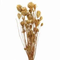 Suszone kwiaty kopru włoskiego natura 100g