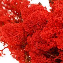Mech dekoracyjny czerwony islandzki do craftingu 400g