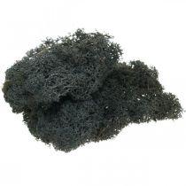 Deco moss czarny zakonserwowany mech islandzki do craftingu 400g