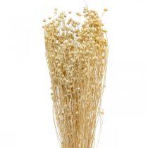 Len bielony suszony florystyczny suszone trawy 100g