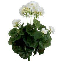 Geranium Bush White 36cm
