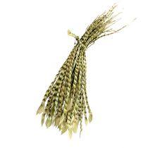 Złoty Wąsik naturalny 50szt