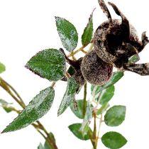 Gałąź róży L92cm ze śniegiem