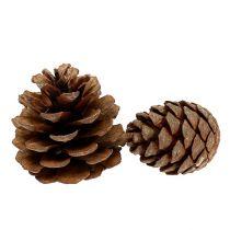 Halepensis cone natural 5kg