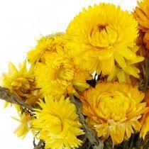 Truskawka żółta Suszone kwiaty Deco Bundle 75g