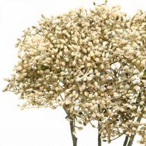 Sztuczny bez biały Dekoracyjna gałązka kwitnąca 52cm 4szt.