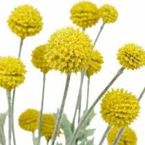 Kwiaty jedwabne Drumstick Yellow Artificial Craspedia